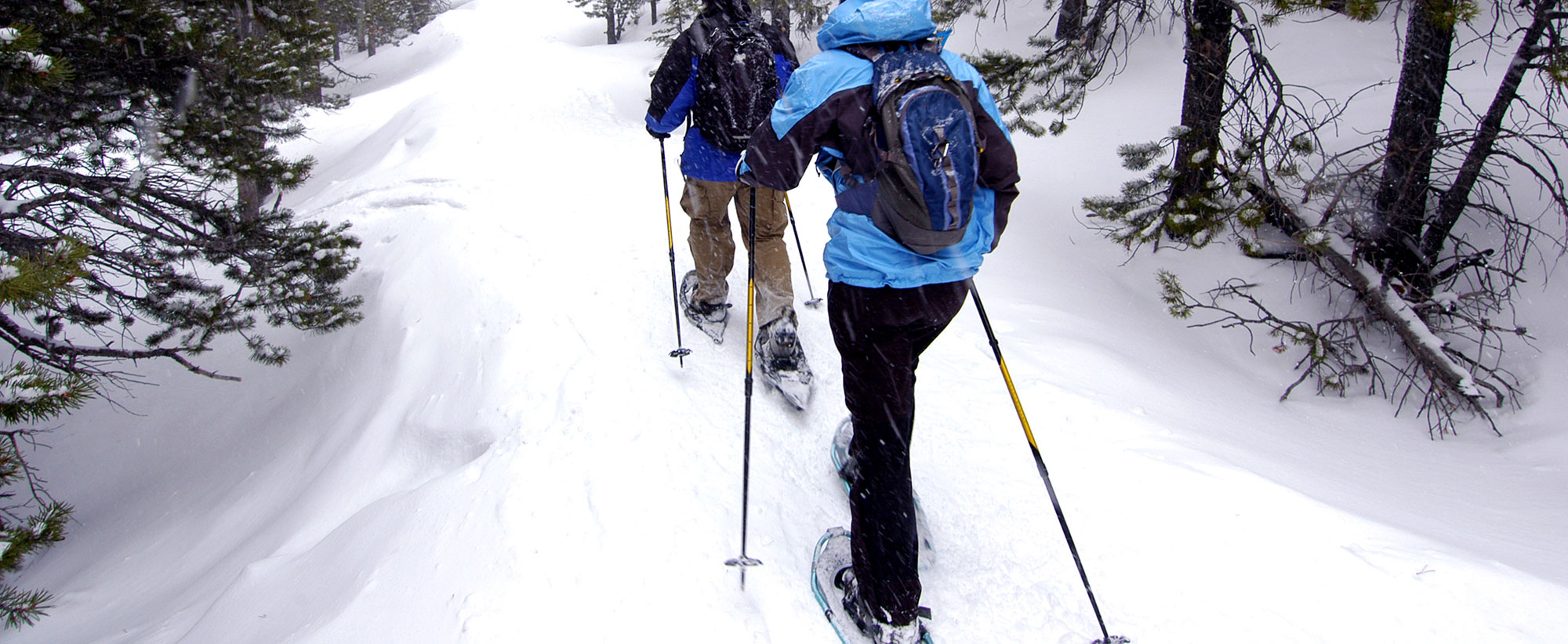 Snowshoeing – Day or Night Hike